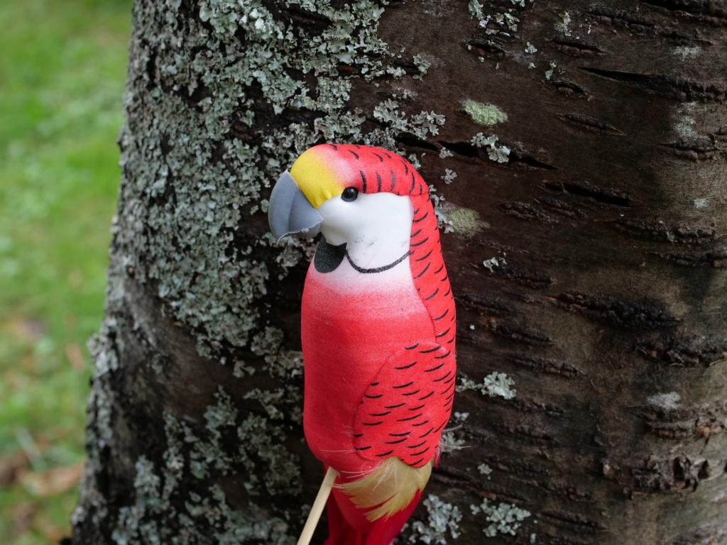 perroquet.... Pana0829