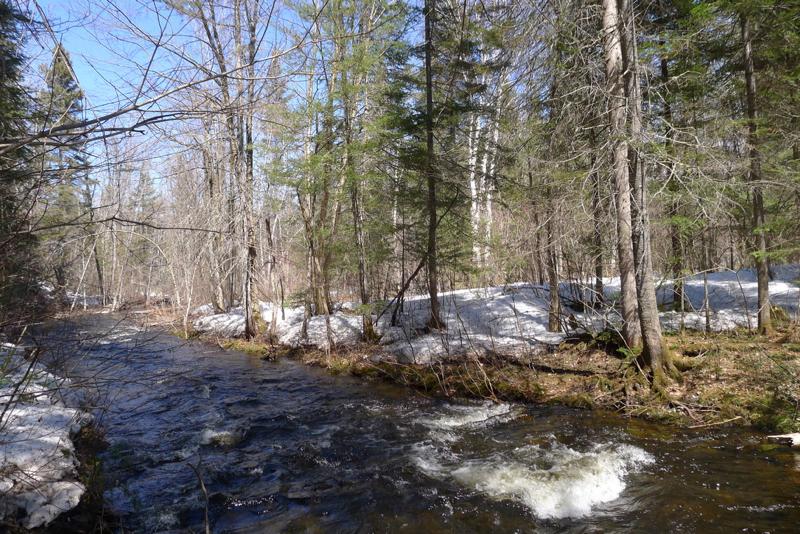 Ruisseau de printemps P1050018