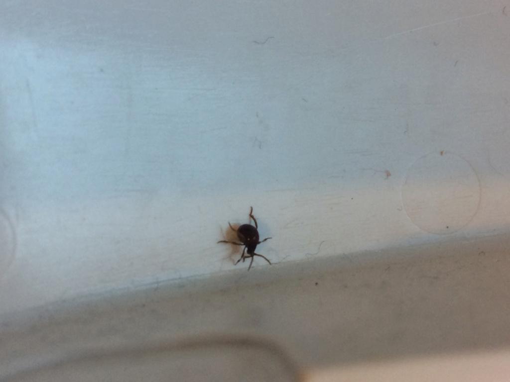 Quel est cet insecte ? Img_3510