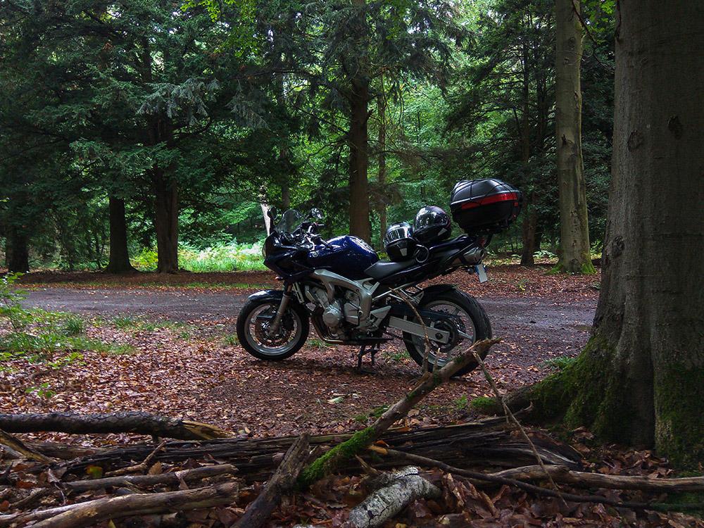 Roadtrip dans les Ardennes Belges Foret_10
