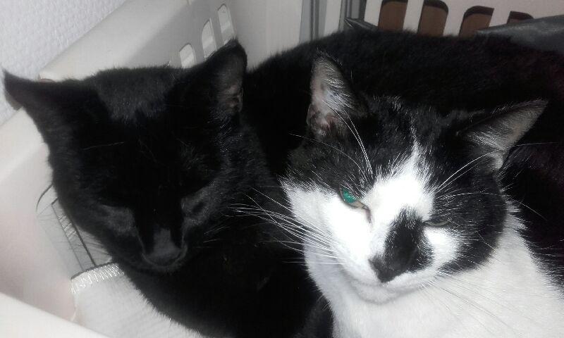 Oudini, chaton mâle noir, né le 12.04.2018 5c8ce010