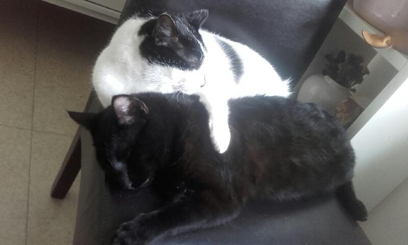 Oudini, chaton mâle noir, né le 12.04.2018 Cdd28c10