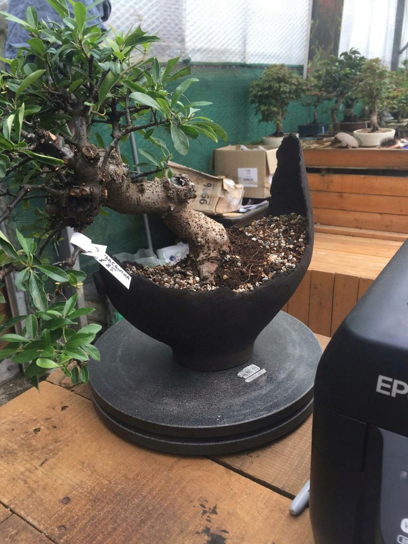 My bonsai pots Receiv12
