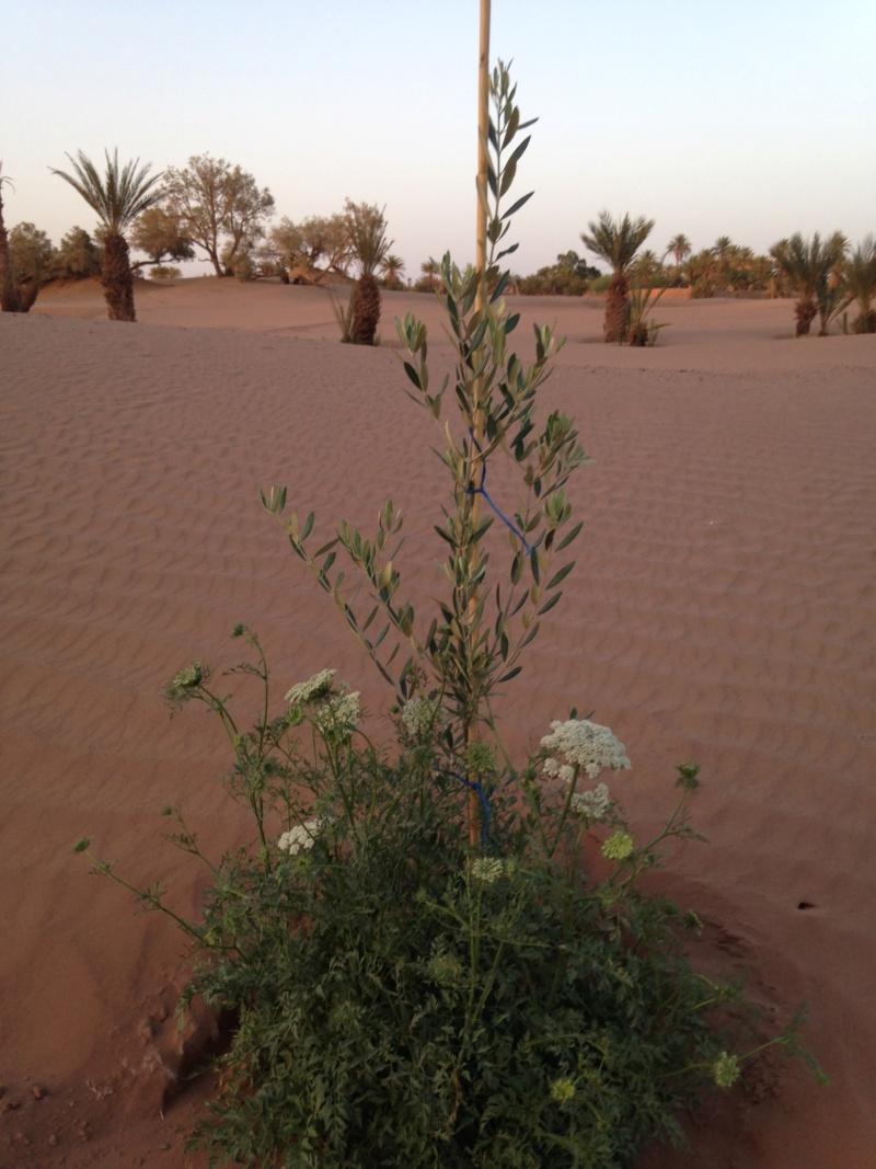 [Maroc Camp/Dernières nouvelles] Mon nouveau camping à Mhamid Esprit Désert - Page 15 Img_0712