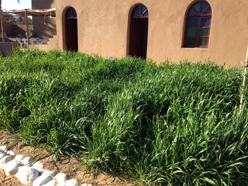 [Maroc Camp/Dernières nouvelles] Mon nouveau camping à Mhamid Esprit Désert - Page 20 Img_1415