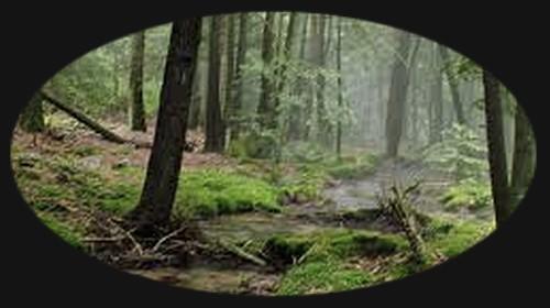 Lesní říčka Images10