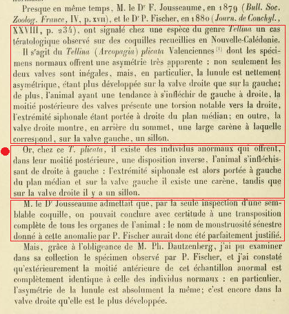Tellina plicata - Valenciennes, 1827 Sans_t30
