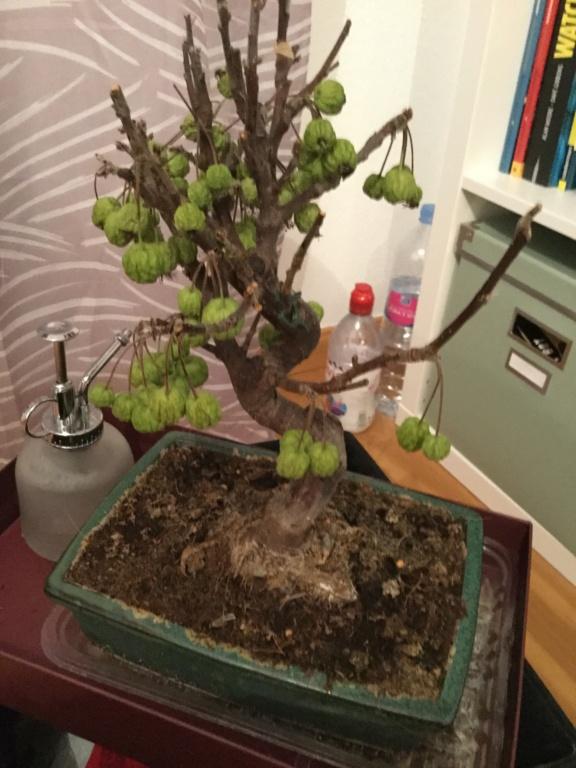 Hola! mi bonsai os necesitaaaaaa 0b0c0e10