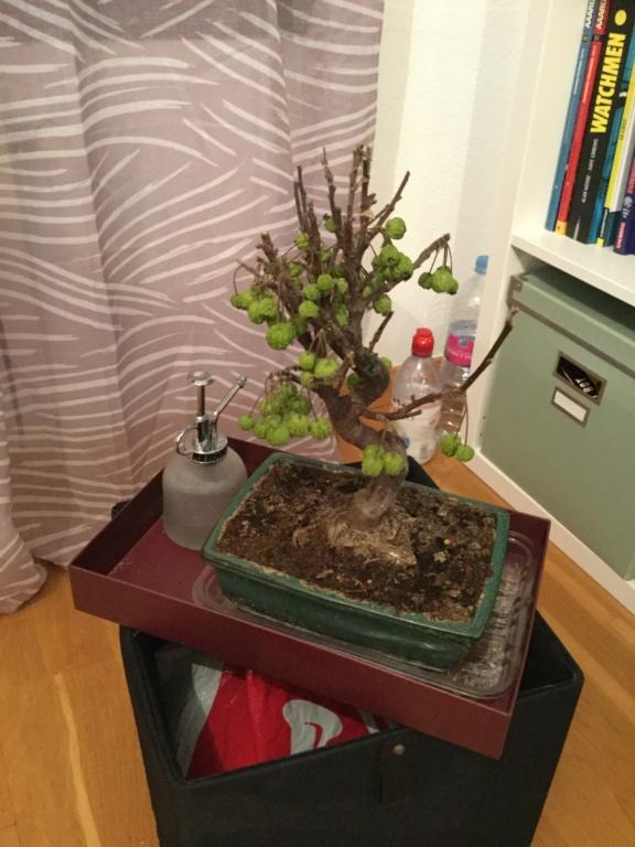 Hola! mi bonsai os necesitaaaaaa C3a2dd10