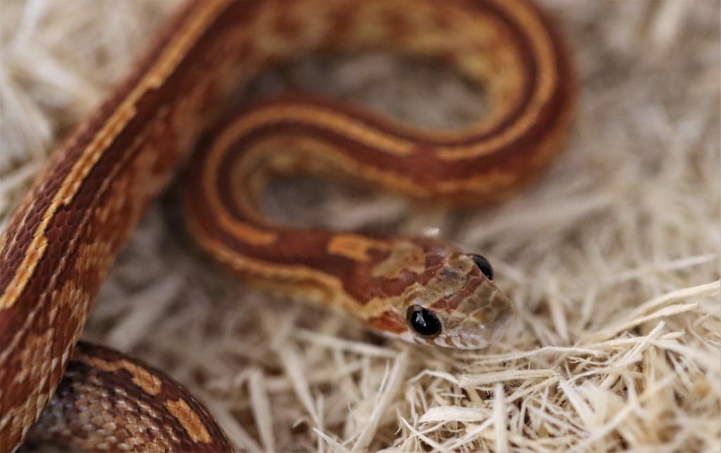 Différence de comportement entre mes serpents Img_2210