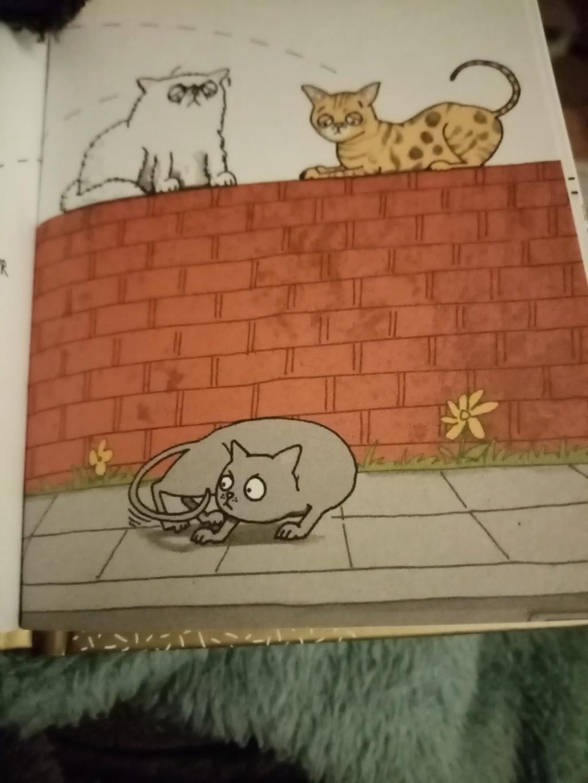 Carré cat 21. (Ewok, on y va. Re-présentation).  - Page 5 Img_1582