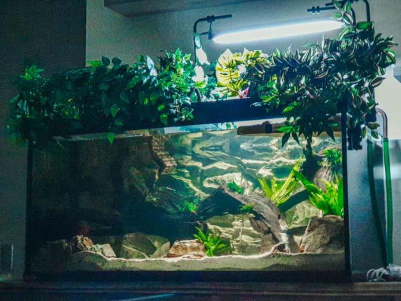 Débutant en aquariophilie. Resize14