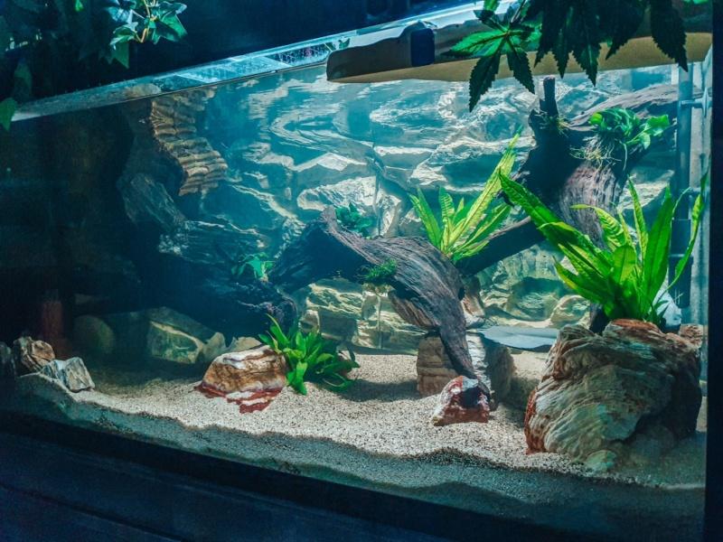 Débutant en aquariophilie. Resize15