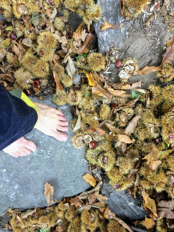 Escursioni d'autunno Img_8712