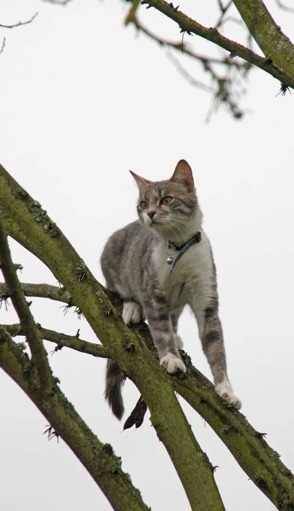 Cmment on fait pour faire descendre un chat à 20 du sol? - Page 2 Img_1711