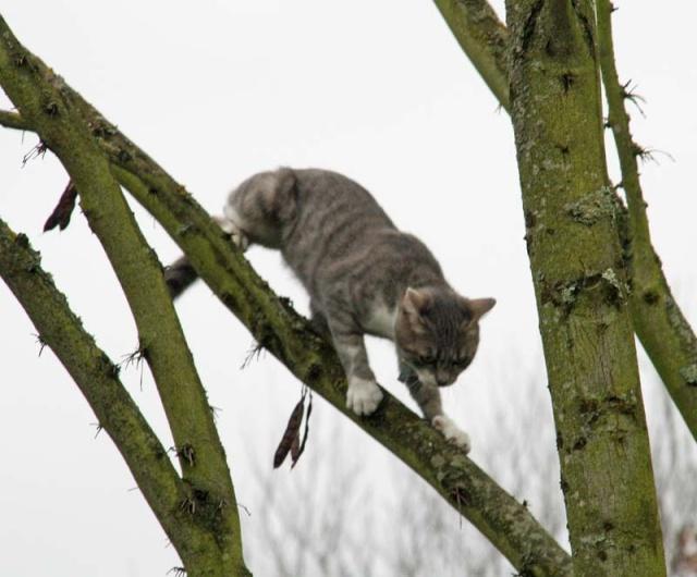 Cmment on fait pour faire descendre un chat à 20 du sol? - Page 2 Img_1712