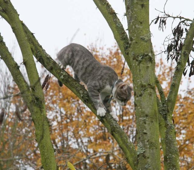 Cmment on fait pour faire descendre un chat à 20 du sol? - Page 2 Img_1713
