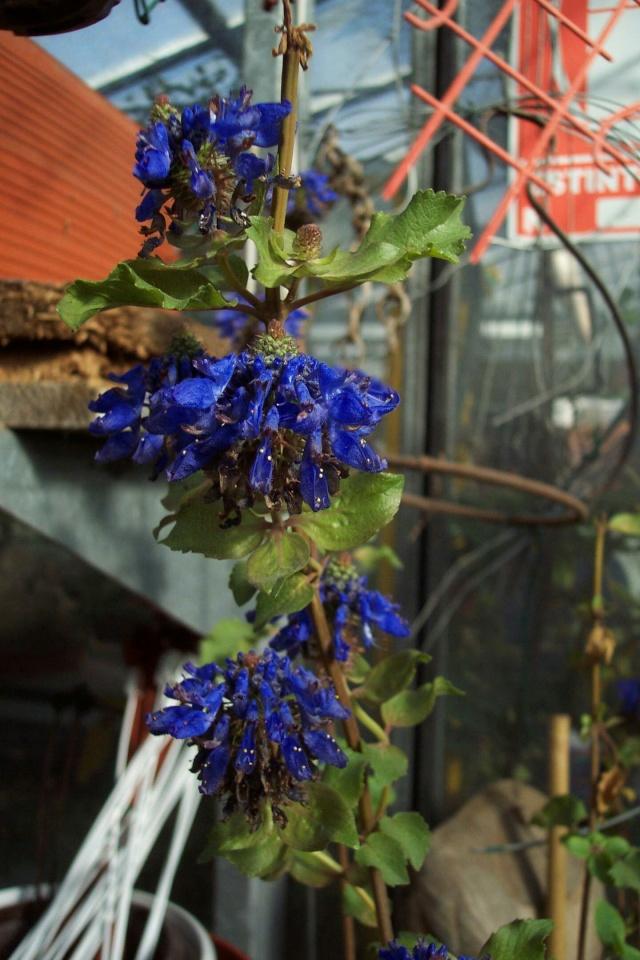 Une très jolie fleur Chez_n10