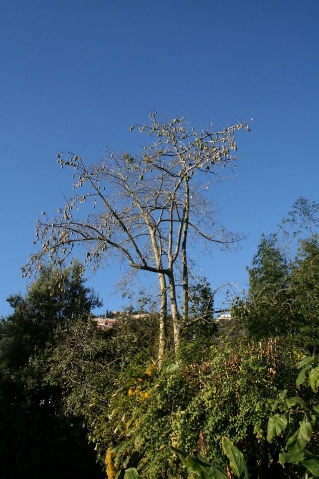 Jardin Botanique Val Rameh de Menton fin décembre 2007 Choris10