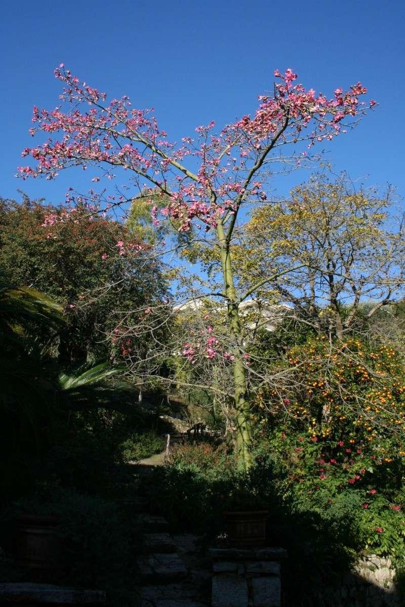 Jardin Botanique Val Rameh de Menton fin décembre 2007 Choris12