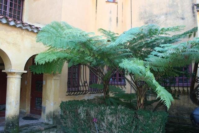 Jardin Botanique Val Rameh de Menton fin décembre 2007 Cyathe10
