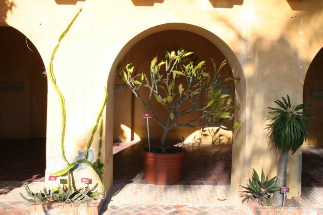 Jardin Botanique Val Rameh de Menton fin décembre 2007 Stapel10