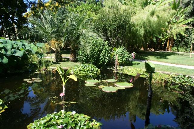 Jardin Botanique Val Rameh de Menton fin décembre 2007 Val_ra10