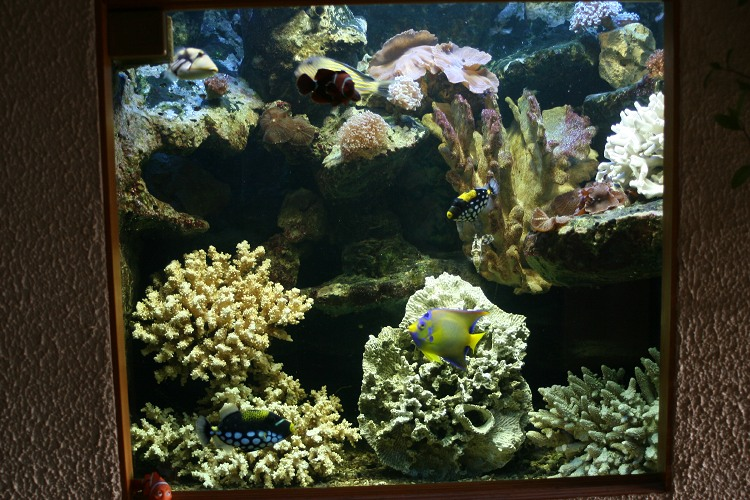 Mes visites récifalistes (adsl) Fish_o10