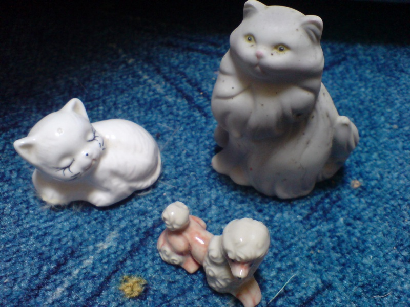 chats miniature Chiens10