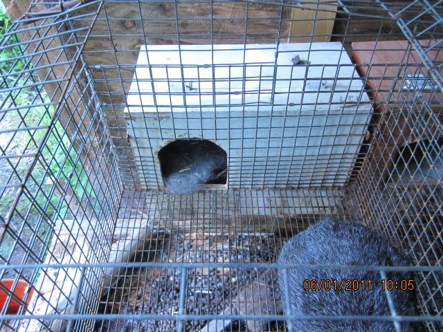 A quoi ça sert un nid? Img_1512