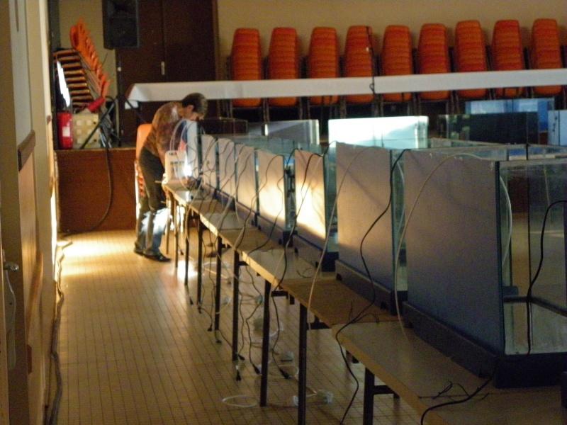 bourse aquariophile : St Hilaire de Villefranche le 17 octobre 2010 Imgp2414