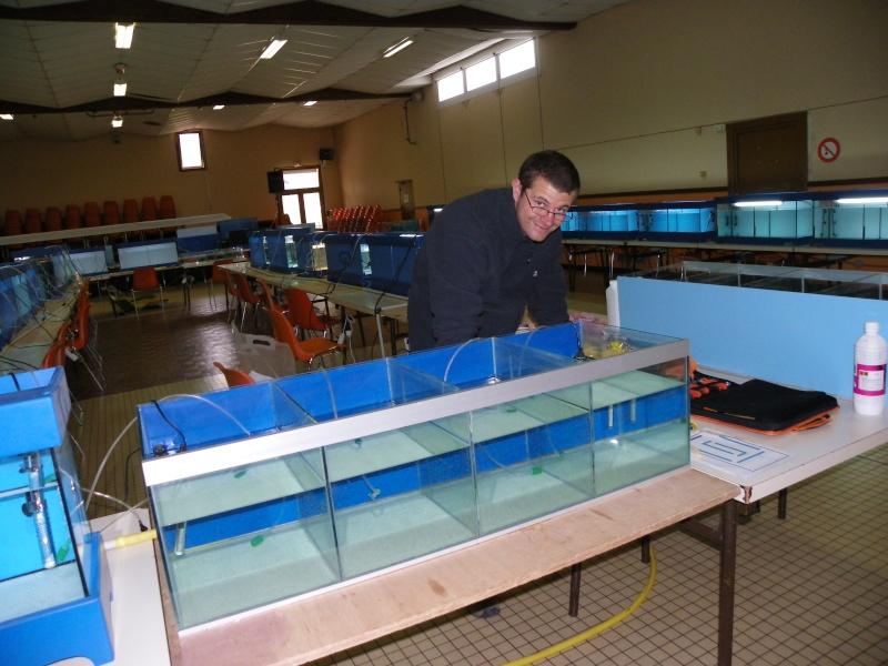bourse aquariophile : St Hilaire de Villefranche le 17 octobre 2010 Imgp2418