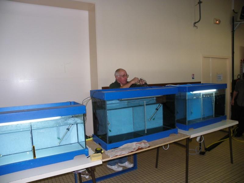bourse aquariophile : St Hilaire de Villefranche le 17 octobre 2010 Imgp2419
