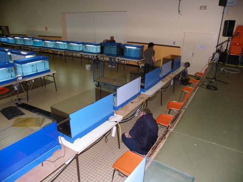 bourse aquariophile : St Hilaire de Villefranche le 17 octobre 2010 Imgp2421