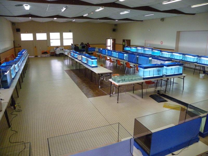 bourse aquariophile : St Hilaire de Villefranche le 17 octobre 2010 Imgp2422