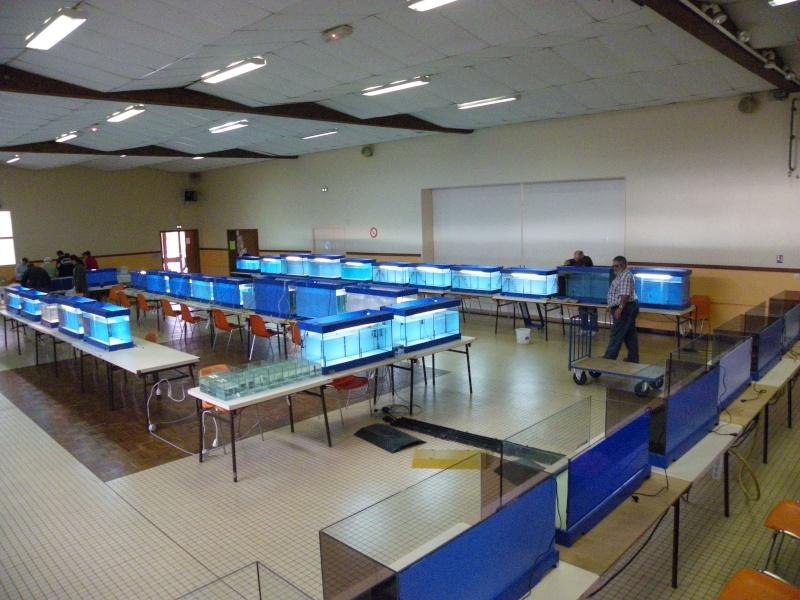bourse aquariophile : St Hilaire de Villefranche le 17 octobre 2010 Imgp2423