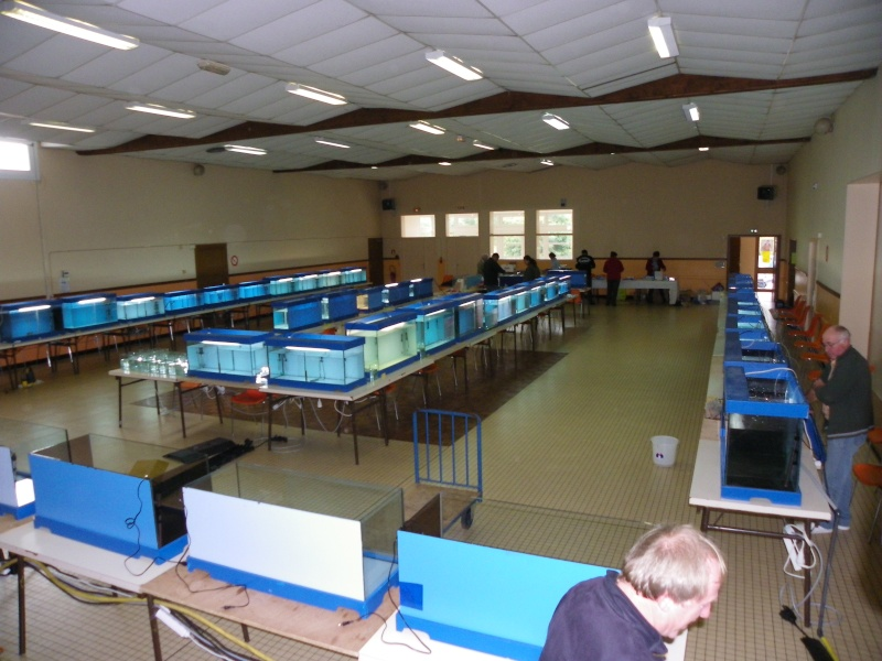 bourse aquariophile : St Hilaire de Villefranche le 17 octobre 2010 Imgp2424