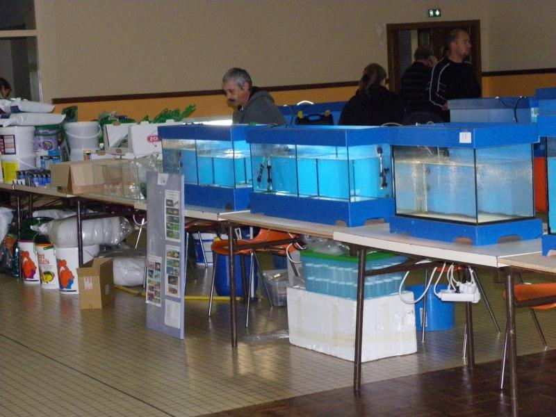 bourse aquariophile : St Hilaire de Villefranche le 17 octobre 2010 Imgp2429