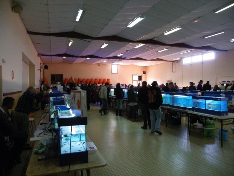bourse aquariophile : St Hilaire de Villefranche le 17 octobre 2010 Imgp2432