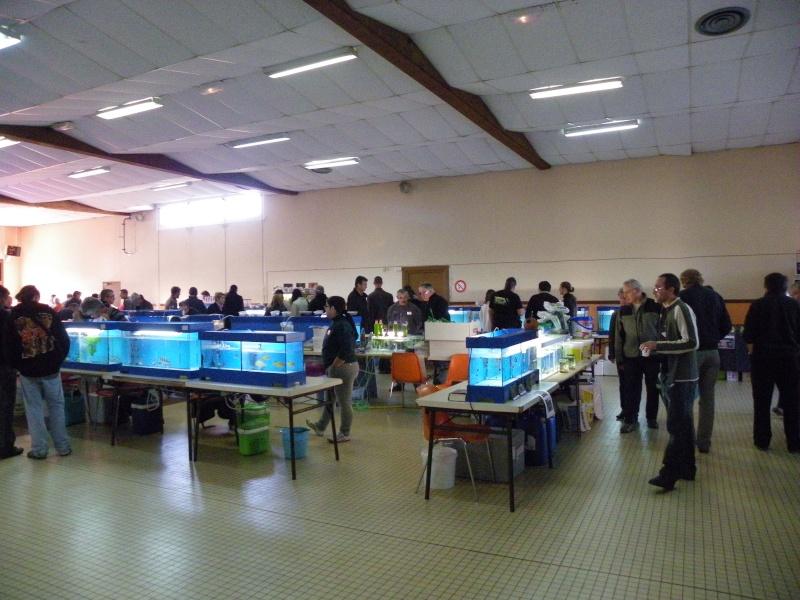 bourse aquariophile : St Hilaire de Villefranche le 17 octobre 2010 Imgp2433