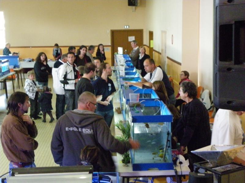 bourse aquariophile : St Hilaire de Villefranche le 17 octobre 2010 Imgp2434