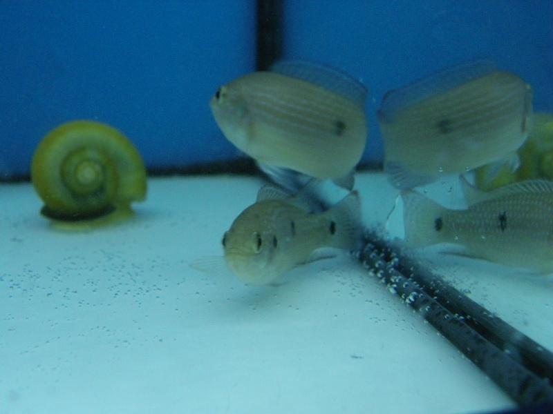 bourse aquariophile : St Hilaire de Villefranche le 17 octobre 2010 Imgp2435