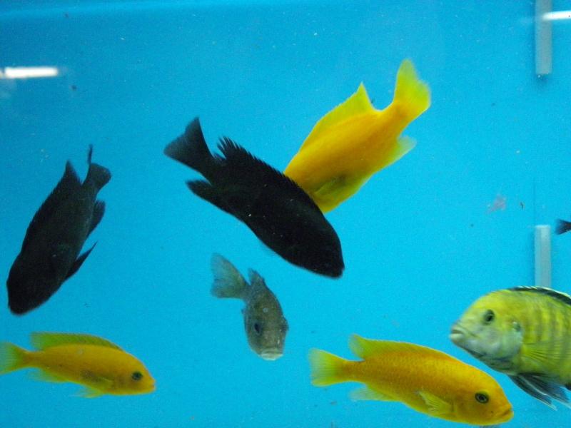 bourse aquariophile : St Hilaire de Villefranche le 17 octobre 2010 Imgp2437
