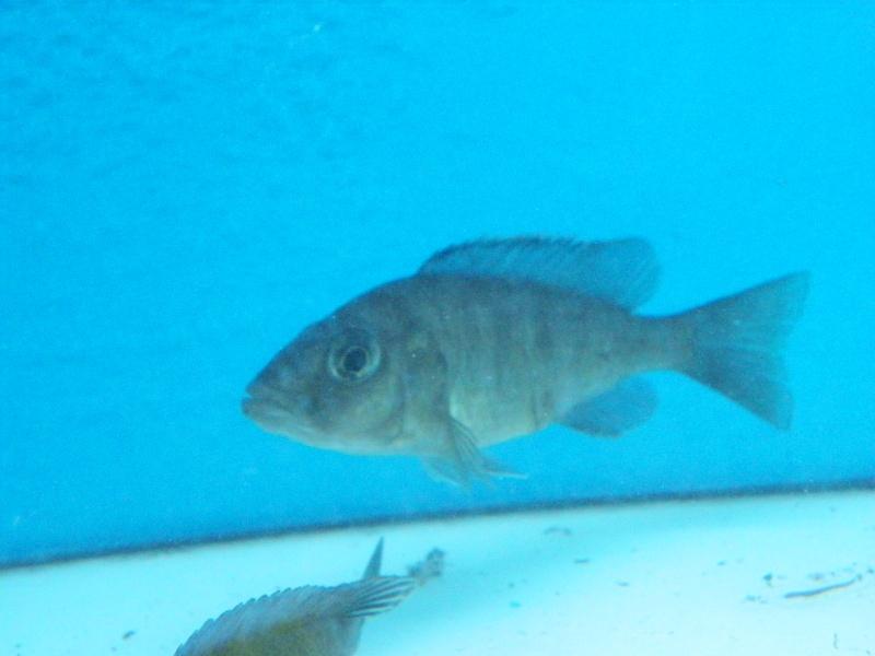 bourse aquariophile : St Hilaire de Villefranche le 17 octobre 2010 Imgp2439