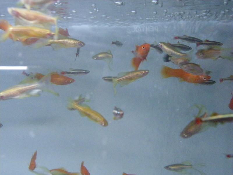 bourse aquariophile : St Hilaire de Villefranche le 17 octobre 2010 Imgp2442