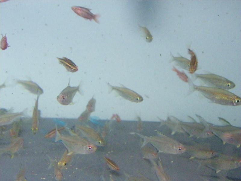 bourse aquariophile : St Hilaire de Villefranche le 17 octobre 2010 Imgp2444