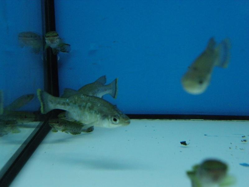 bourse aquariophile : St Hilaire de Villefranche le 17 octobre 2010 Imgp2450