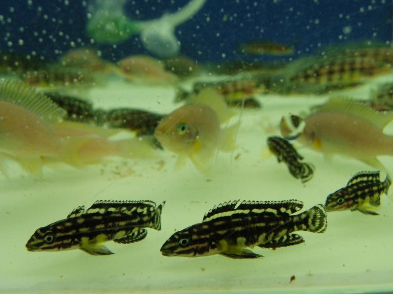 bourse aquariophile : St Hilaire de Villefranche le 17 octobre 2010 Imgp2454