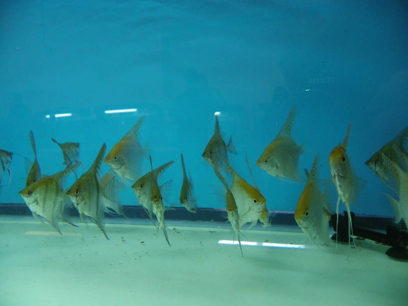 bourse aquariophile : St Hilaire de Villefranche le 17 octobre 2010 Imgp2456
