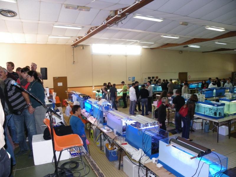 bourse aquariophile : St Hilaire de Villefranche le 17 octobre 2010 Imgp2481